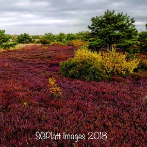 Dry Cranberry Bog-Cape Cod National Seashore